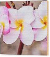 Plumerias Of Paradise 10 Wood Print