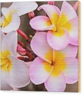 Plumerias Of Paradise 12 Wood Print