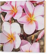 Plumerias Of Paradise 2 Wood Print
