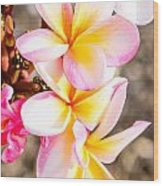 Plumerias Of Paradise 4 Wood Print