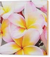 Plumerias Of Paradise 6 Wood Print