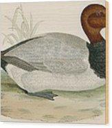 Pochard Wood Print