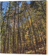 Pocono Trees Wood Print