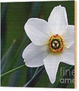 Poet's Daffodil Wood Print