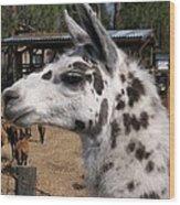 Polka Dot Llama Pogo Rules Wood Print