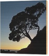 Pohutukawa Trees At Sunrise Wood Print