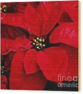 Poinsettia # 2 Wood Print