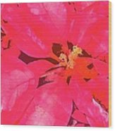 Poinsettia 1 Wood Print
