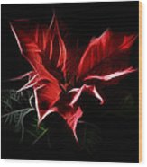 Poinsettia - Christmas Flower Wood Print