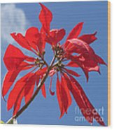 poinsettia from Madagascar Wood Print