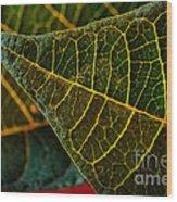 Poinsettia Green Leaf Wood Print