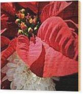 Poinsettia In Bloom Wood Print