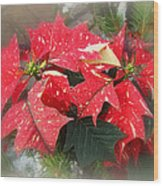 Poinsettia In Red And White Wood Print