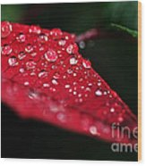 Poinsettia Leaf With Water Droplets Wood Print