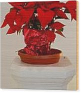 Poinsettia On A Pedestal No 1 Wood Print