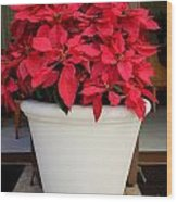 Poinsettias In A Planter Wood Print