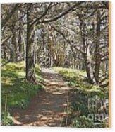 Point Lobos Cypress Path Wood Print