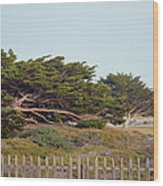 Point Pinos Lighthouse Pacific Grove California Wood Print