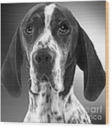 Pointer Dog Wood Print