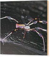 Points Of Contact - Spider - Orb Weaver Wood Print