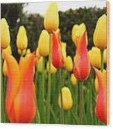 Pointy Tulips Wood Print
