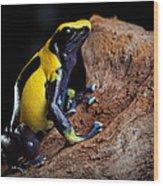 Poison Dart Frog Wood Print