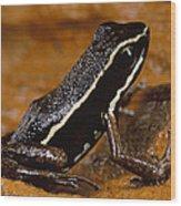 Poison Dart Frog Portrait Amazonian Wood Print