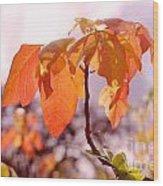 Poison Ivy Beauty Wood Print