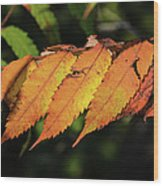 Poison Sumac Golden Kickoff To Fall Colors Wood Print