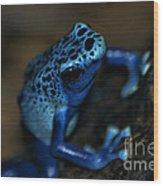Poisonous Blue Frog 02 Wood Print