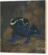 Poisonous Frog 02 Wood Print