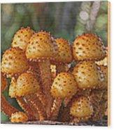 Poisonous Looking Mushrooms Wood Print