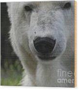 Polar Bear 3 Wood Print