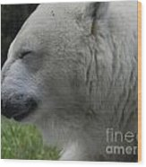 Polar Bear 4 Wood Print