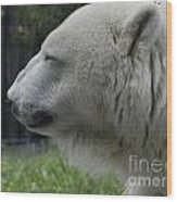 Polar Bear 5 Wood Print