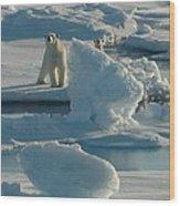 Polar Bear And Cub Wood Print