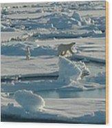 Polar Bear And Her Cub Wood Print