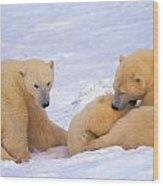 Polar Bear Chew Toy Wood Print
