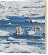 Polar Bear Cubs In Svalbard Wood Print