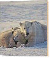 Polar Bear Family Nap Wood Print