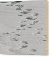 Polar Bear Footprints Wood Print