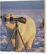 Polar Bear Investigating Photographers Wood Print