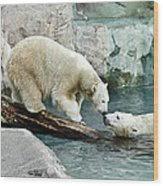 Polar Bear Kiss Wood Print