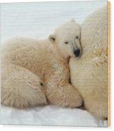 Polar Bear Mother & Cub Wood Print