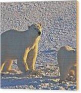 Polar Bear Mother And Cub On Ice Wood Print