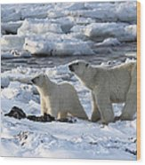 Polar Bear Mother And Cub Sniffing The Air Wood Print