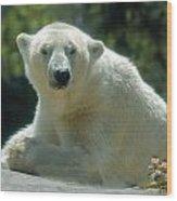 Polar Bear Portrait Wood Print