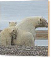 Polar Bear Snuggle Wood Print