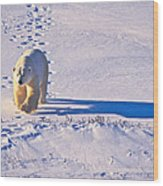 Polar Bear Tracks Wood Print