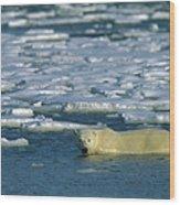 Polar Bear Wading Along Ice Floe Wood Print